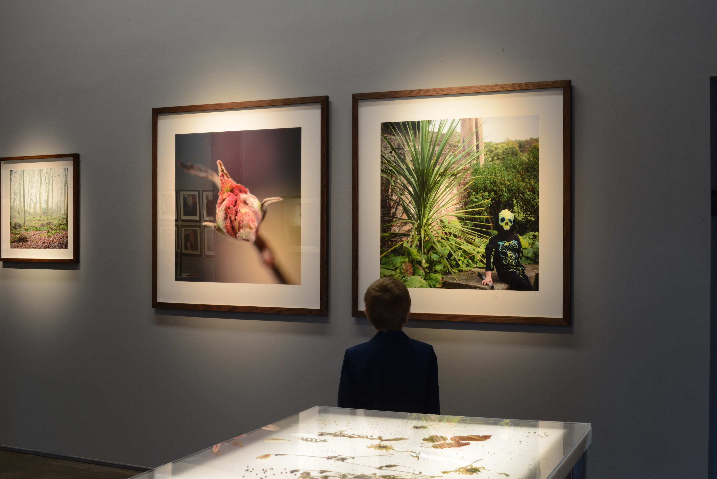 Little boy looking at two pictures on the wall
